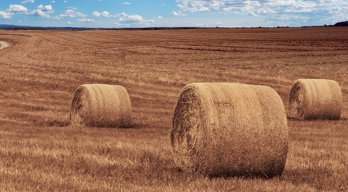 kentsel tarım