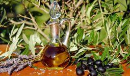 zeytin yetiştiriciliği ve zeytinyağı