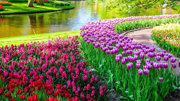 çiçek tarım