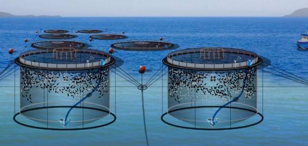 balık çiftliği