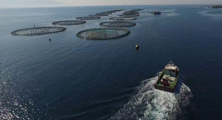 balık yetiştiriciliği çiftlik kurmak