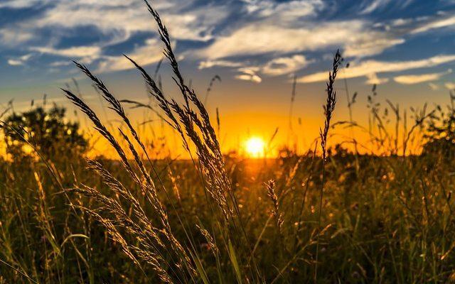 tarımsal kredi